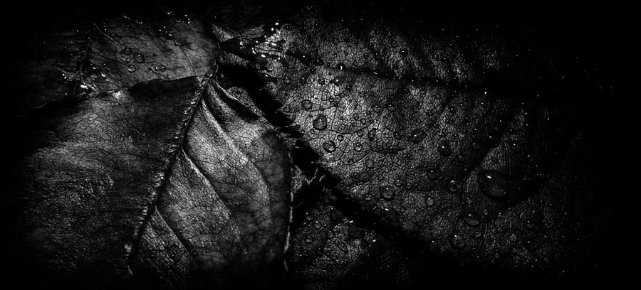Matti Ollikainen Photograph - Gator by Matti Ollikainen