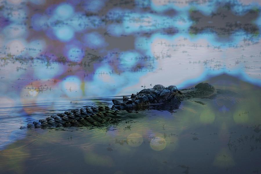 Lake Okeechobee Photograph - Gator by Richard Goldman