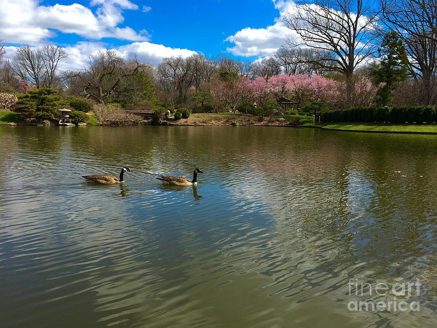 Geese of Spring  by Debbie Fenelon
