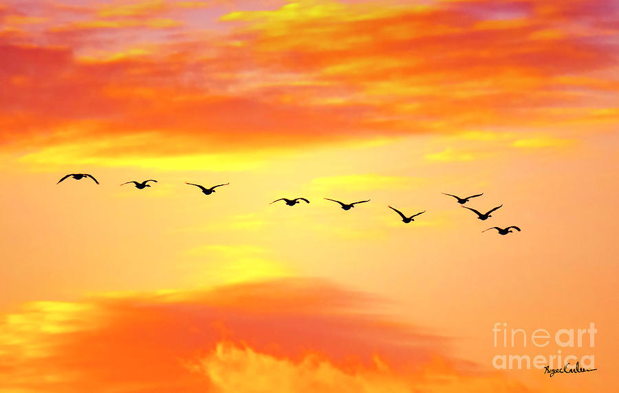 Geese on Canvas by Roger Carlsen