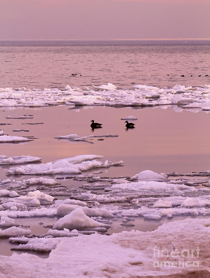 Sunset Photograph - Geese On Lake Huron At Sunset by Kathy DesJardins