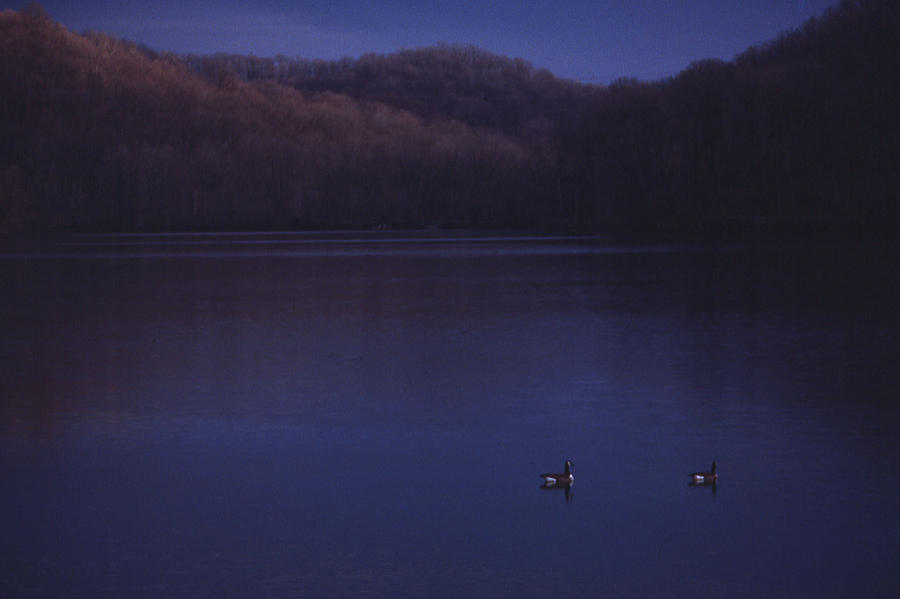 Nashville Photograph - Geese On Radnor Lake by Randy Muir