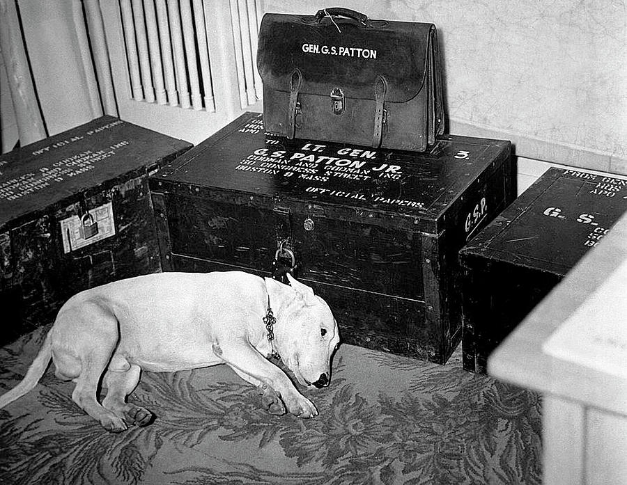 General George  Pattons Dog On The Day Of Pattons Death  December 21 1945 Photograph