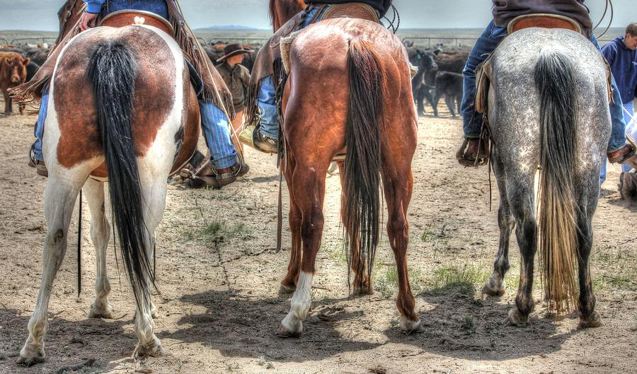 Cowboys Photograph - General Public by Vikki Correll