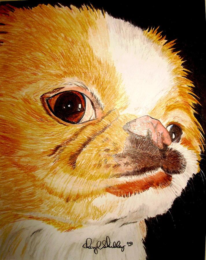 Dog Drawing - Gengi by Cheryl Shibley