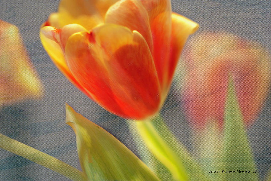 Tulips Photograph - Gentility by Jessica Manelis