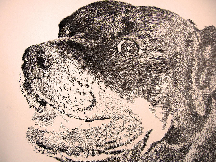 Rottweiler Drawing - Gentle Giant by Robbi  Musser
