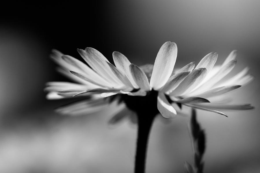Flower Photograph - Gentle by Peteris Vaivars