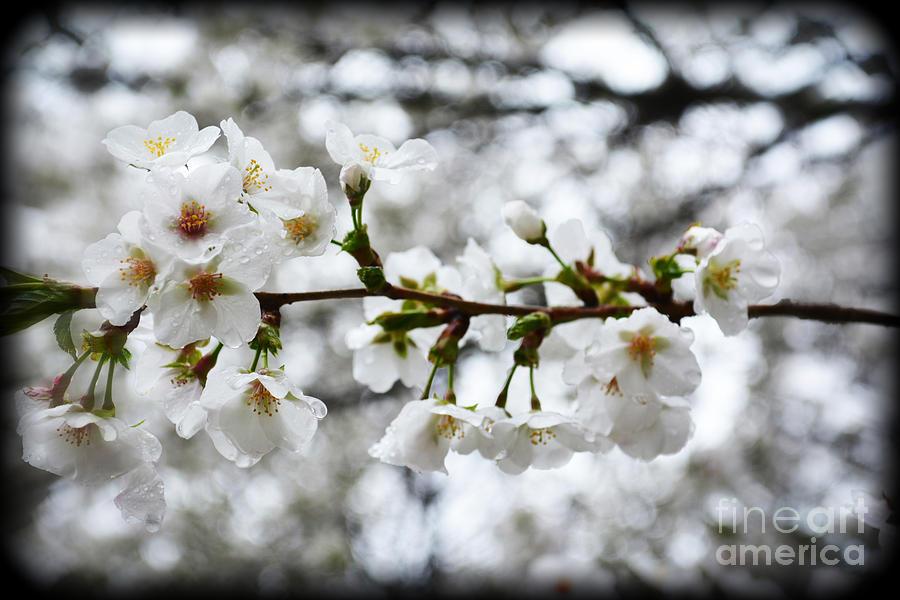 Botanical Photograph - Gentle Purity by Eva Thomas