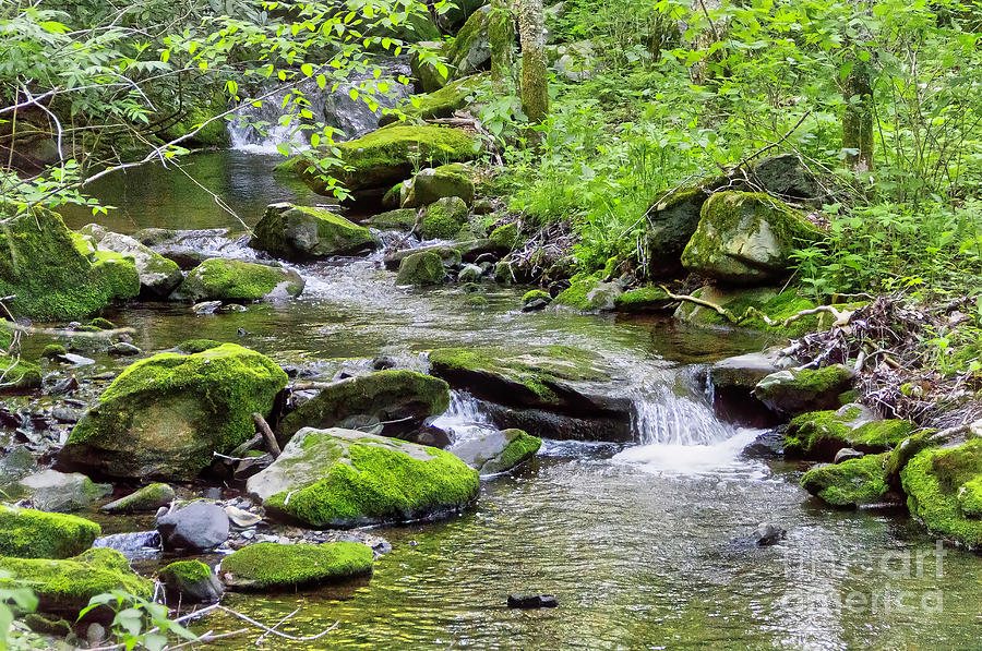 Nature Photograph - Gentle Stream by James Foshee