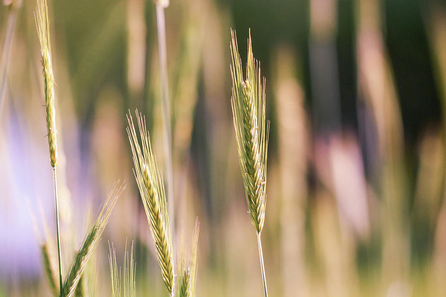 Breeze Photograph - Gently Swaying by Shelley Smith