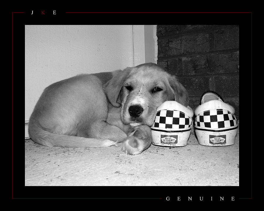 Puppy Photograph - Genuine by Jonathan Ellis Keys