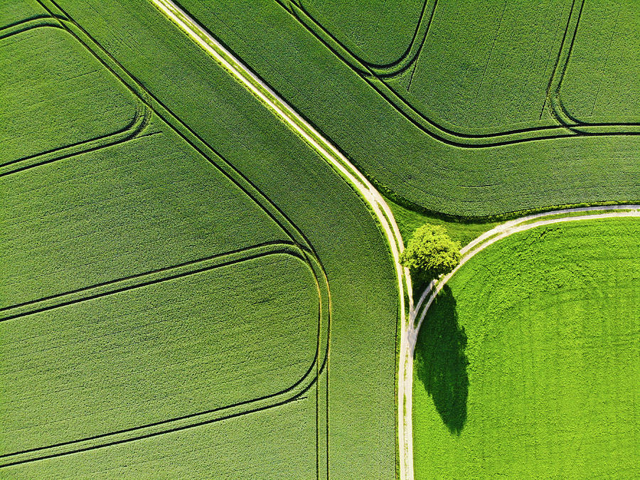 Geometric landscape 05 Tree and green fields aerial view by Matthias Hauser