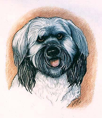 Dog Portrait Drawing - George by Linda Sala
