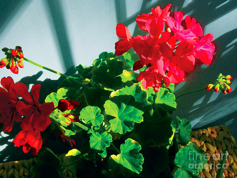 Red Flowers Photograph - Geranium by David Klaboe