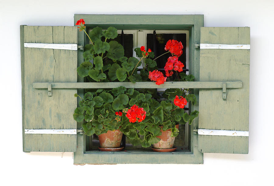 Geranium Photograph - Geranium Window by Frank Tschakert