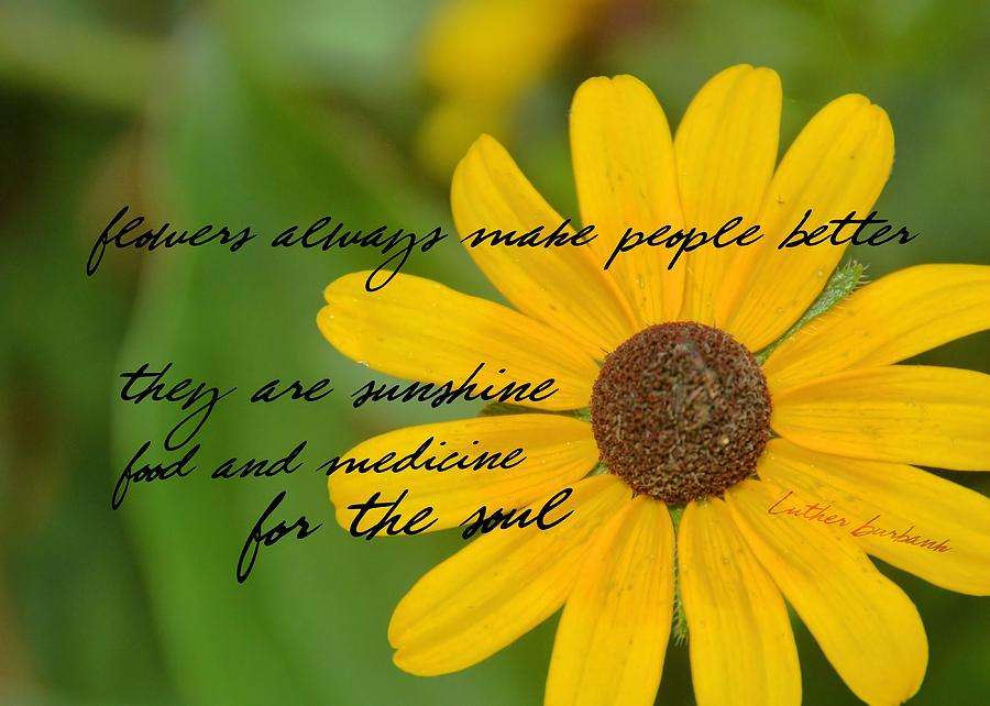 Gerber Photograph - Gerber Daisy Quote by JAMART Photography