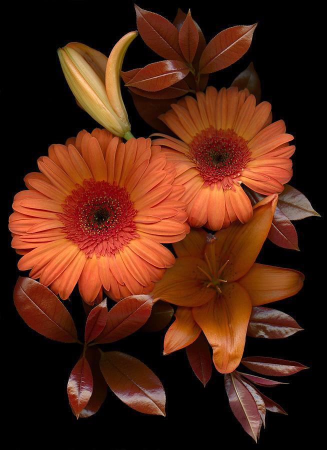 Floral; Botanical; Scanner Photography; Scanograph; Gerbera Photograph - Gerbera Cluster by Marsha Tudor