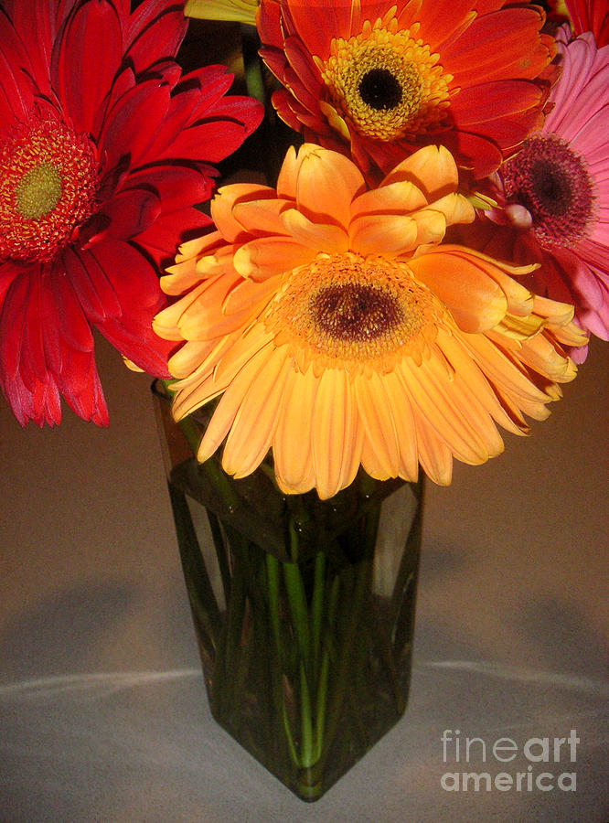 Nature Photograph - Gerbera Daisies - Vased by Lucyna A M Green
