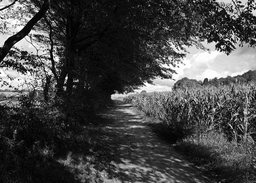 Deutschland Photograph - German Path Black And White by Edward Myers