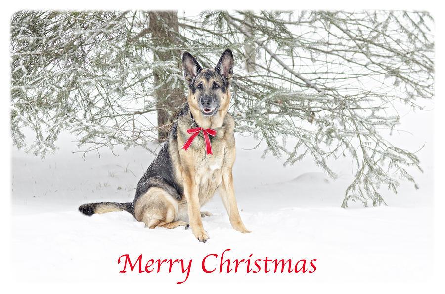 Merry Christmas In German.German Shepherd Dog Merry Christmas