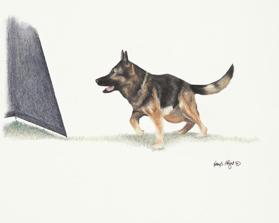 German Shepherd Dog Schutzhund Protection Drawing Nancy Hilgert - German-shepherd-drawings