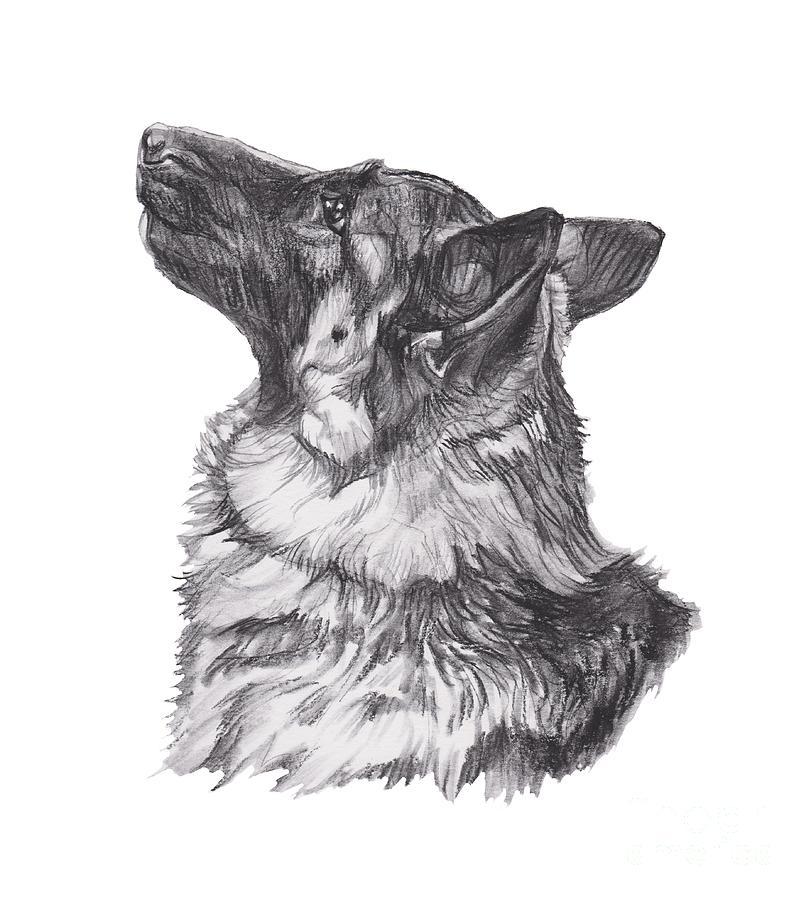 German Shepherd Profile Drawing Drawing By I Am Lalanny - German-shepherd-drawings