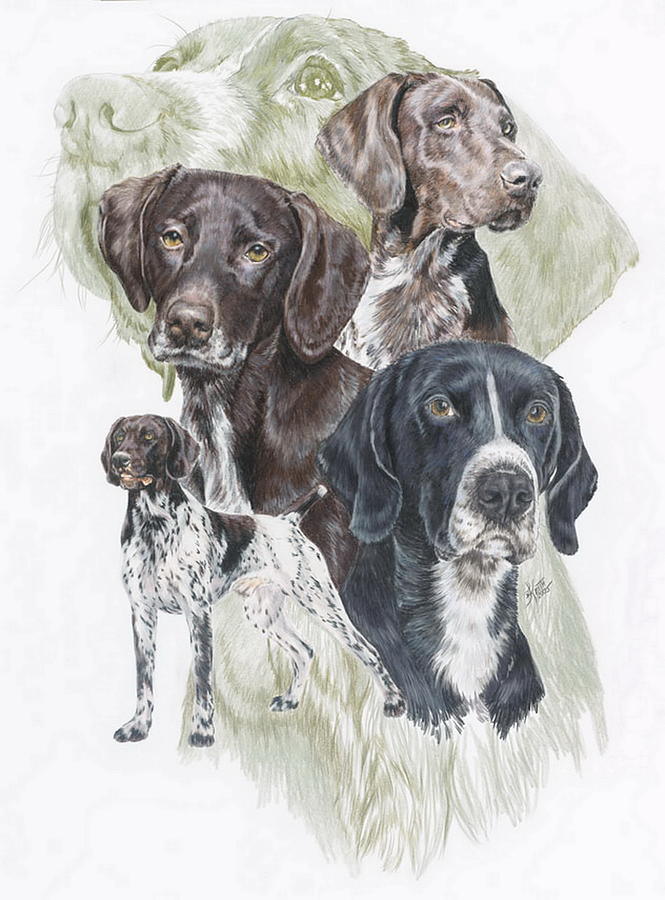 Gshp Mixed Media - German Shorted-haired Pointer Revamp by Barbara Keith