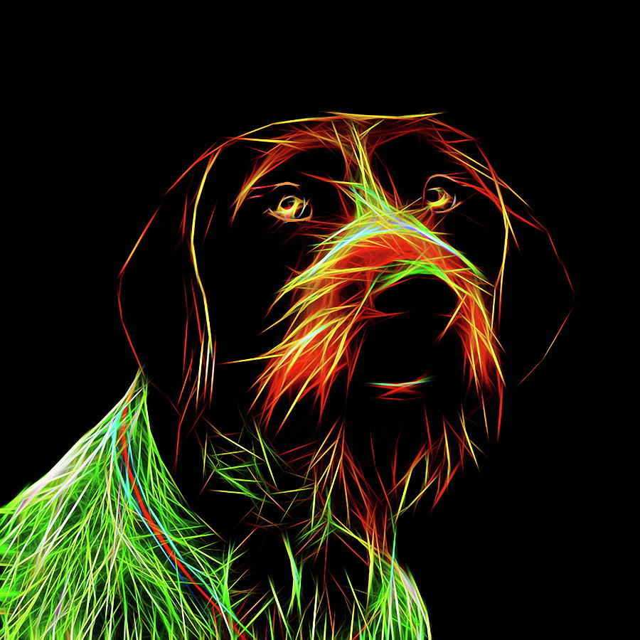 German Wirehaired Pointer Digital Art by Alexey Bazhan