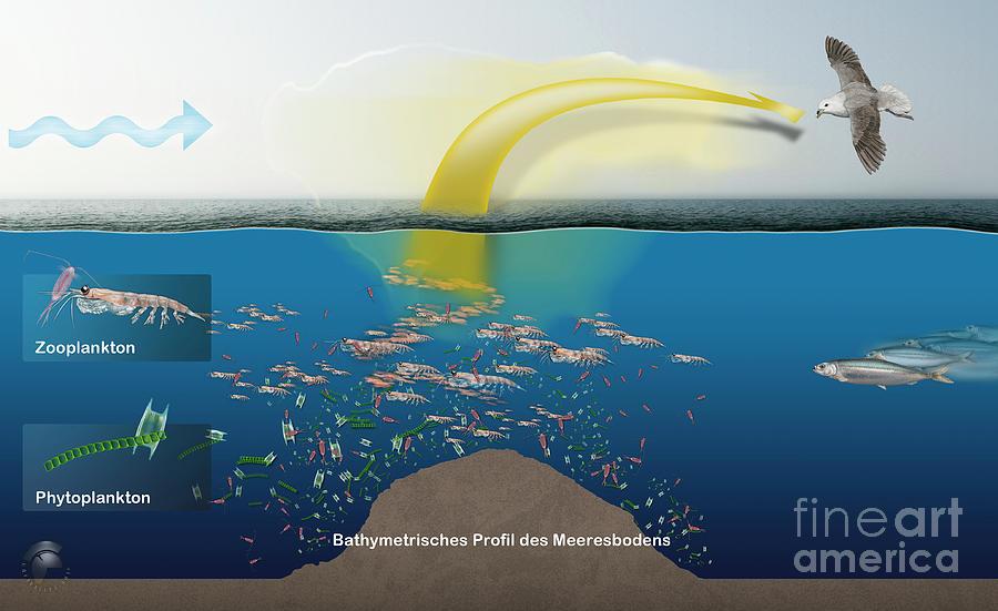 Geruchssinn von Eissturmvoegeln - Procellariidae  by Urft Valley Art
