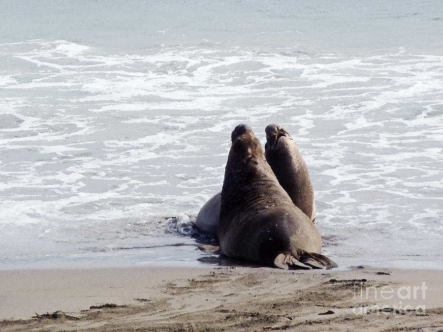 Elephant Seals Photograph - Get Off My Beach by Methune Hively