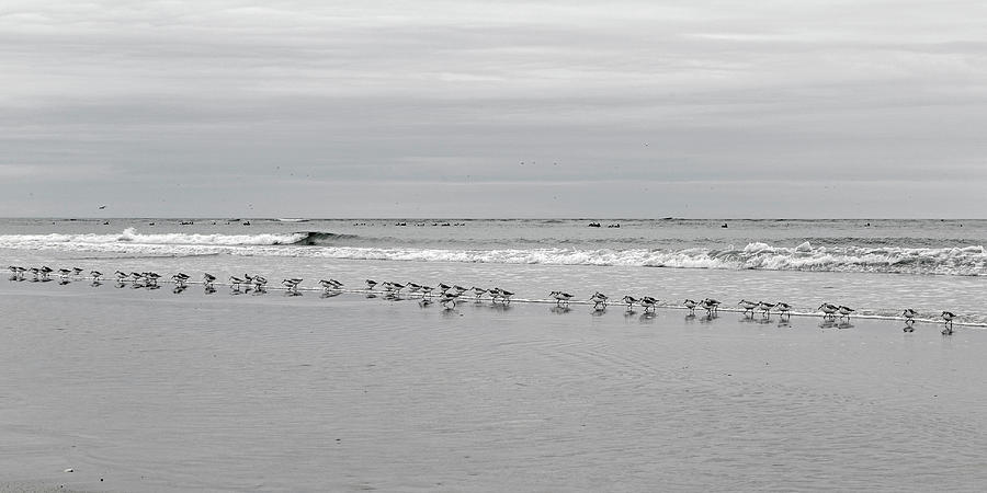 Ocean Photograph - Get Your Ducks In A Row by Betsy Knapp