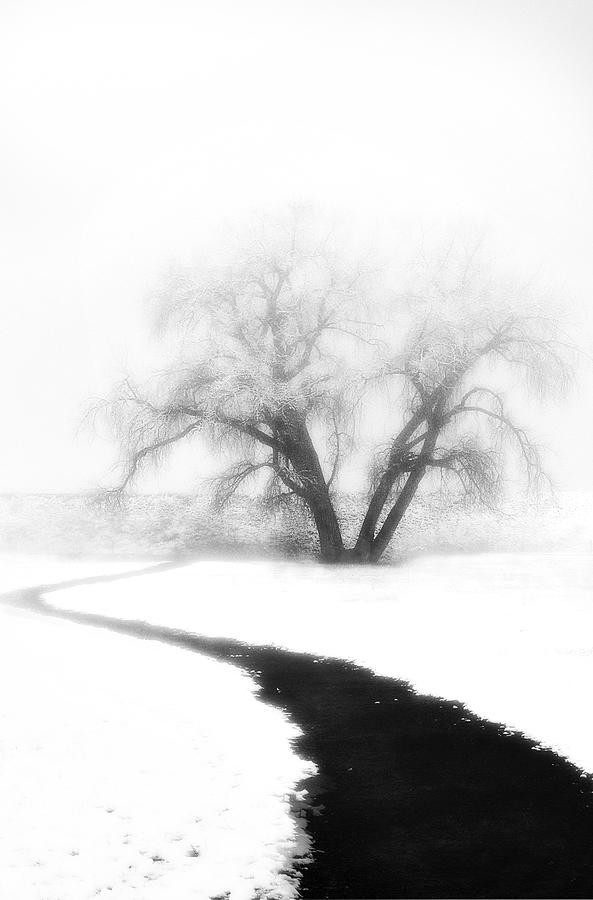 Tree Photograph - Getting There by Marilyn Hunt