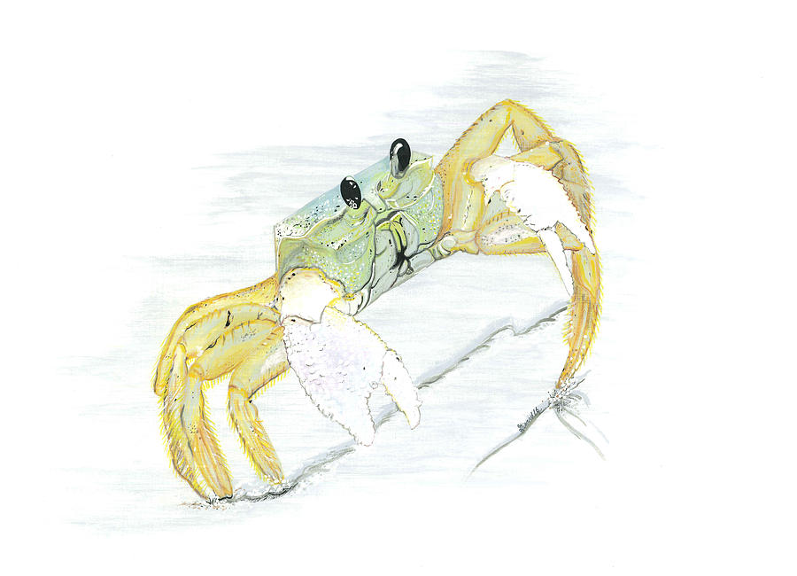 Ghost Crab Painting - Ghost Crab drawing the line by Jason Girard