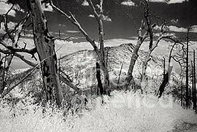 Landscape Photograph - Ghost Forest by Eileen Mandell
