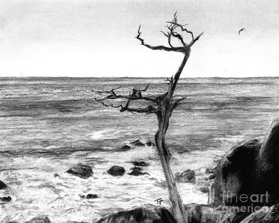 drawings | Burnt Landscapes  |Charcoal Drawings Of Landscapes