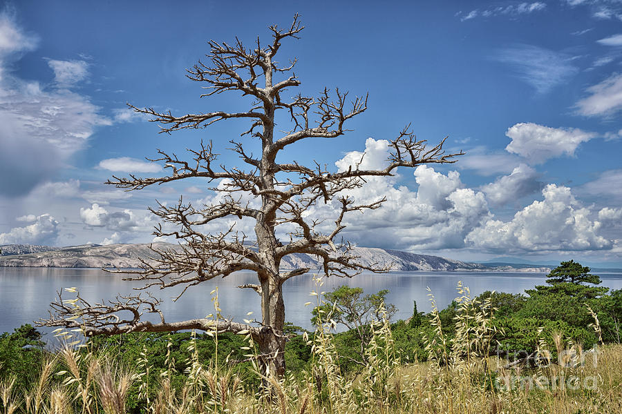Ghost Tree Photograph - Ghost Tree by Norman Gabitzsch