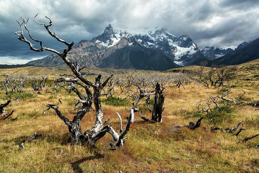 Ghost Trees of Patagonia by Stuart Gordon