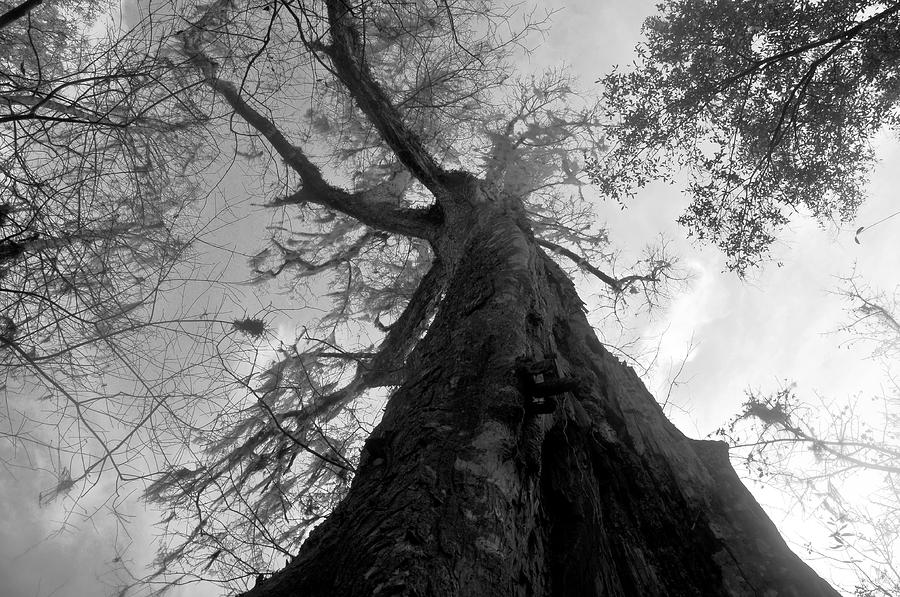 Ghostly Photograph - Ghostly Tree by David Lee Thompson