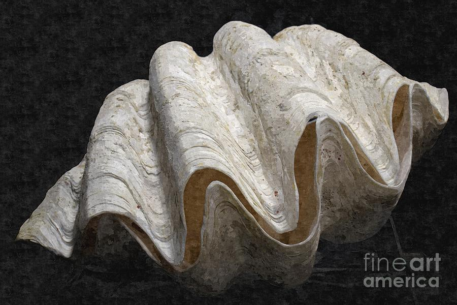 Giant Clam Digital Art by Jennifer Capo