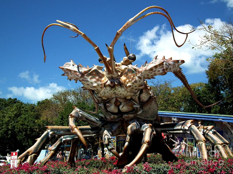 Lobster Photograph - Giant Lobster by Tammy Chesney