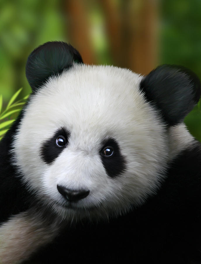 Sizzling image in printable panda pictures