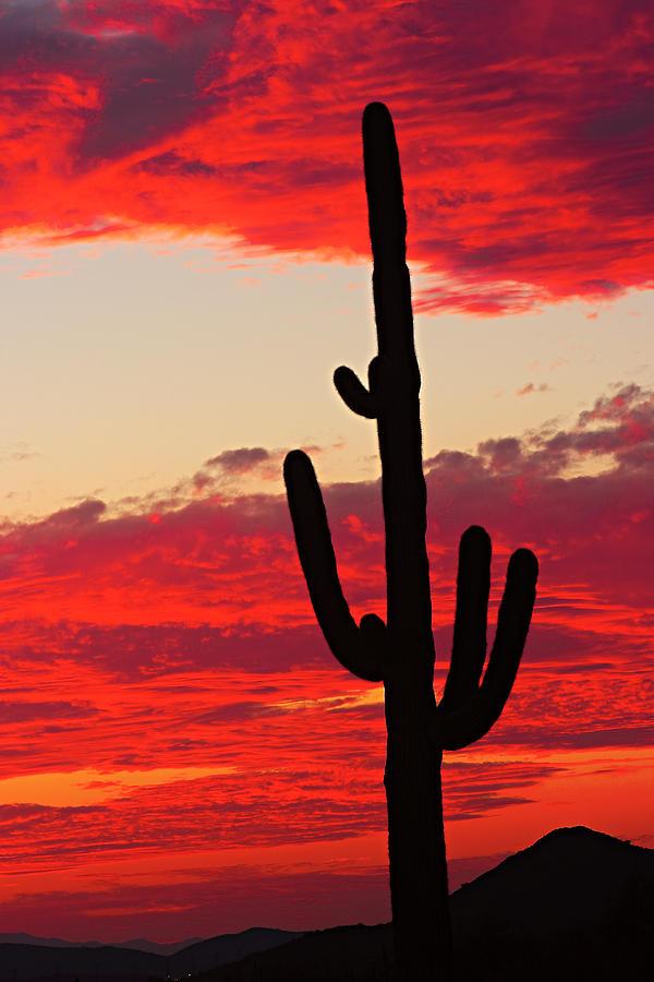 Sunset Photograph - Giant Saguaro  Southwest Desert Sunset by James BO  Insogna