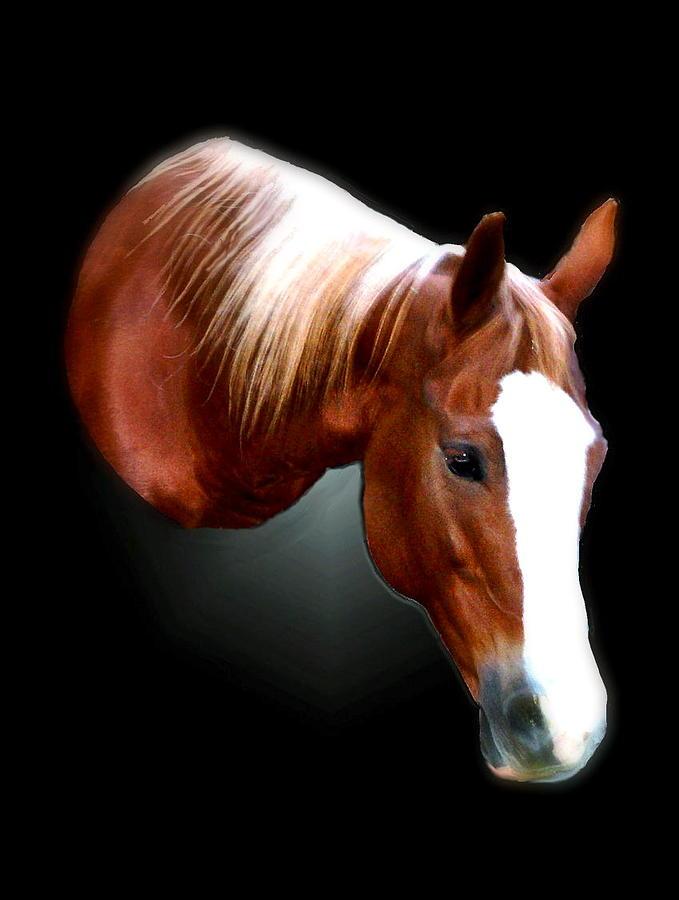 Horse Photograph - Gidget by Toni Blake
