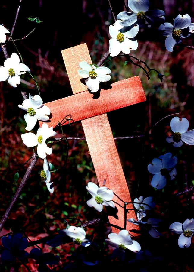 Cross Photograph - Gift Cross And Dogwood by John Foote