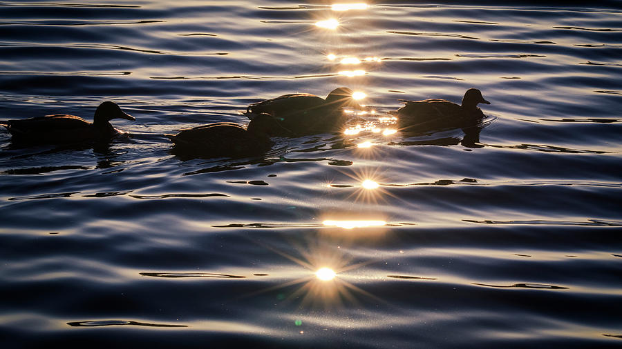 Water Photograph - Gifts Of Sunshine by Windy Corduroy
