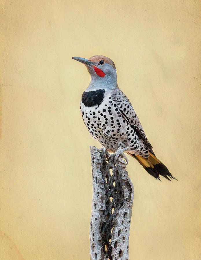 Gilded Flicker by James Capo