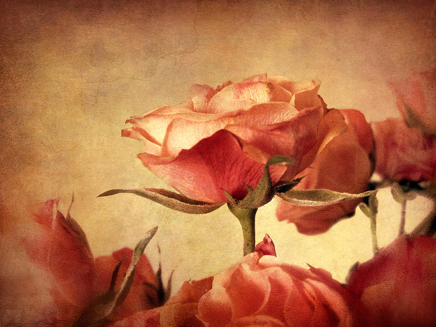 Flowers Photograph - Gilded Roses by Jessica Jenney