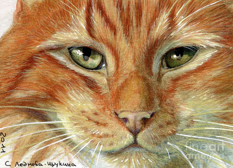 Ginger Cat Daisies Print by I Garmashova