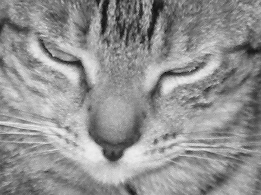 Cat Photograph - Gingers Closeup by Maria Bonnier-Perez